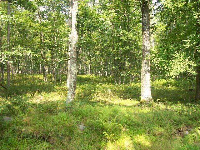 5. Land for Sale at Lot 95 White Tail Cir Hawley, Pennsylvania 18428 United States