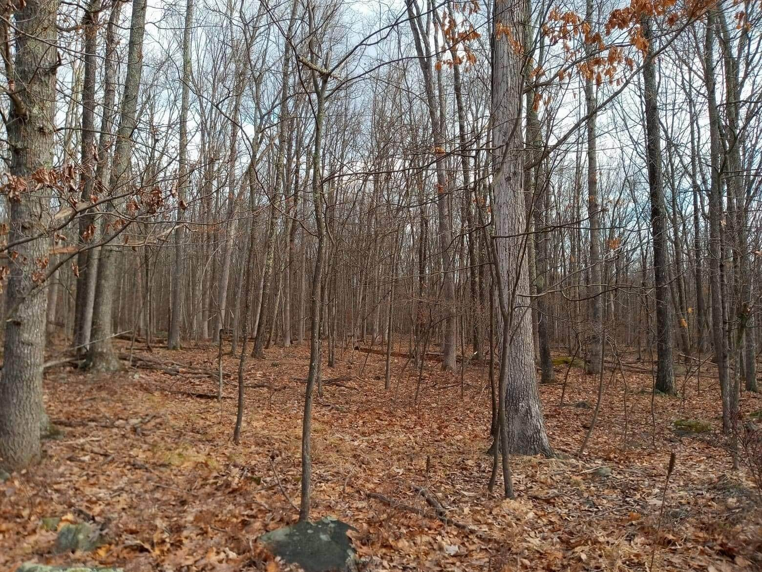 12. Land for Sale at 1033 Acacia Dr Hawley, Pennsylvania 18428 United States